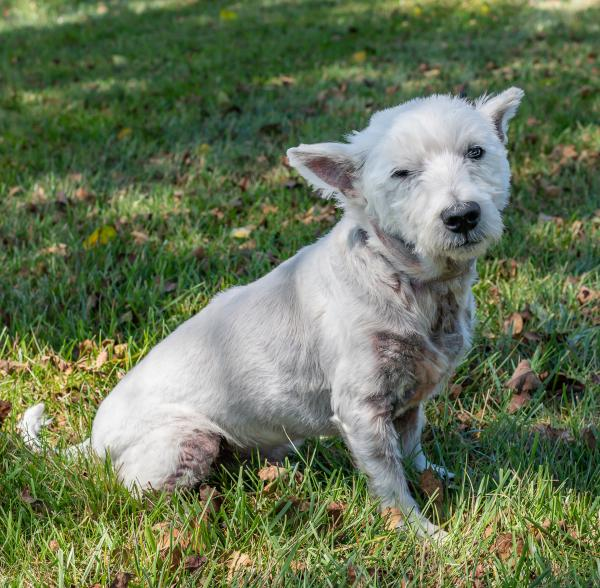 Silver Linings Rescue - Journal - Suki - A Silver Linings Success Story