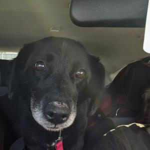 Silver Linings Rescue - Quila in the car